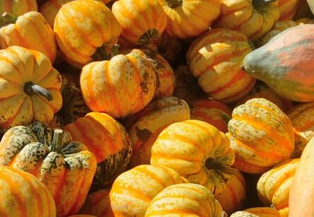 银川发起设立农业特色优势产业担保基金