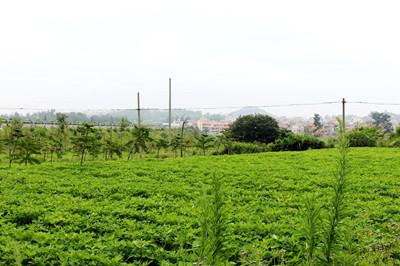 国营青县农场概况、投资环境及发展情况