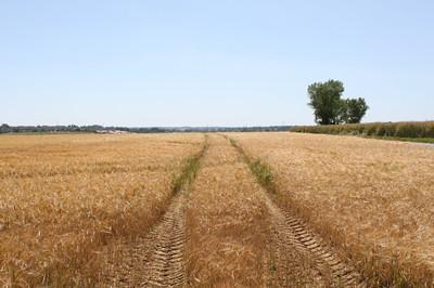 樟树土地流转促进贫困农民家门口脱贫致富