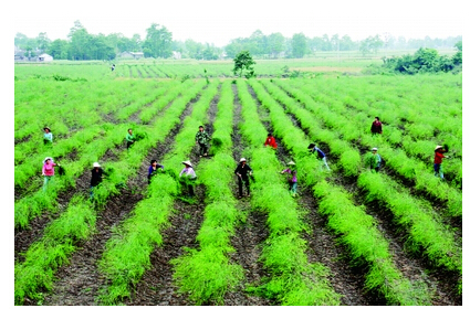吉林农业大省如何通过土地流转发展休闲农业