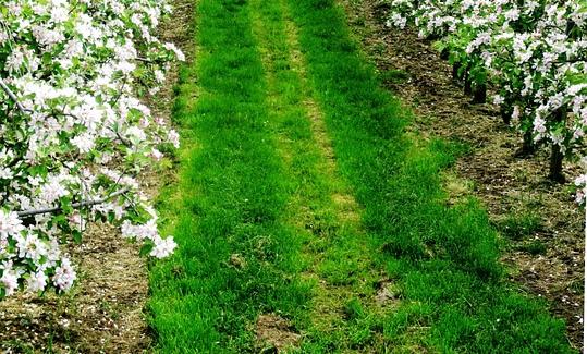 峨眉山市绥山镇关于2016年调整完善农业三项补贴政策实施方案