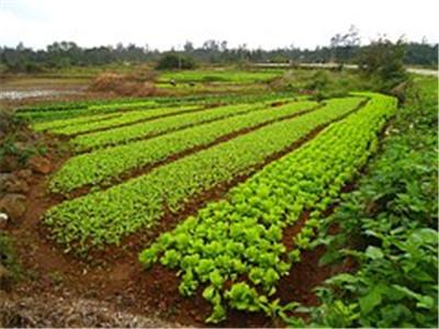 贵州威宁土地流转:合作社+基地+农户+种植能手 日子转起来