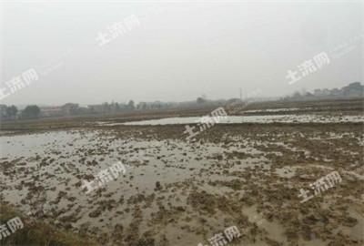 广西耕地质量与保护同步得到提升