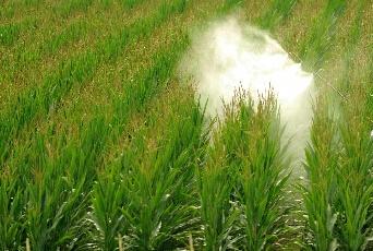 济南市制定紧急方案:确保农作物安全越冬
