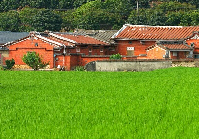 上海市水稻面积80%以上由家庭农场经营