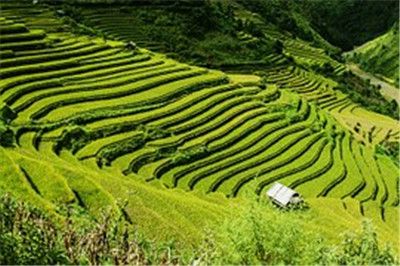 广西来宾市:土地确权促流转  规模经营出效益