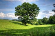 农村土地流转已成规模 或将推动农业现代化变局