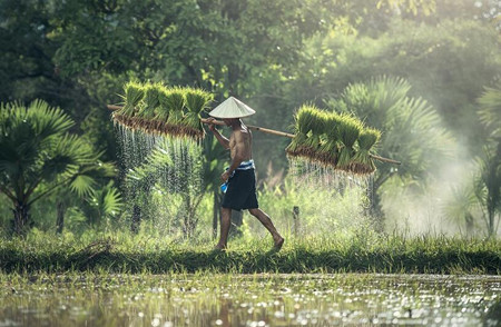 巴南区2016年一般农户耕地地力保护补贴标准为多少钱一亩?