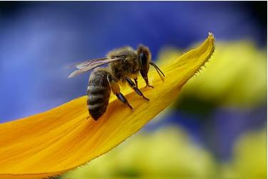 新增农业补贴来了!山东省获1000万元补贴养蜂机具购置!
