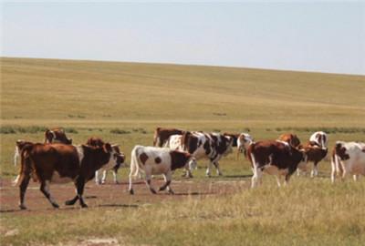 辽宁省:朝阳市现代畜牧业发展模式成为全省典范
