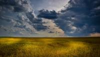 农村土地股份合作社有哪些优势?又有哪些困境呢?
