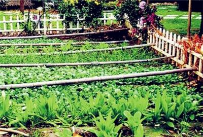 十堰市土地流转新模式:家庭农场成主要推动力量
