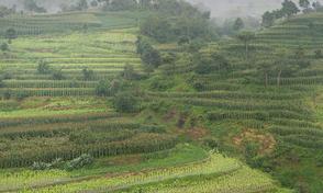 泸县农村土地确权流转的哪些做法值得我们学习?