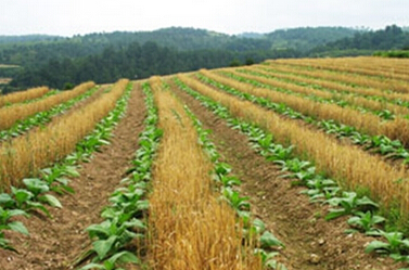 郴州市嘉禾县家庭农场注册规模及发展成效