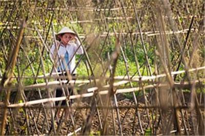 四川纳溪区土地流转:推动规模经营促葡萄增收