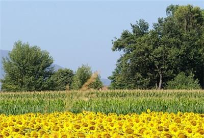 黑龙江省庆安县林下养殖业呈规模发展态势