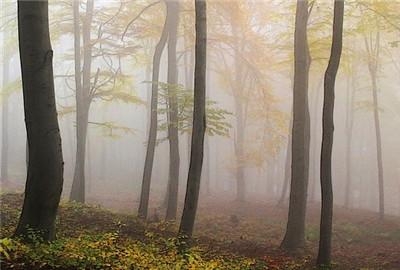 甘肃省率先在国内开展家庭林场工商注册登记工作