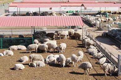 呼和浩特市畜牧业养殖生产情况及价格报告