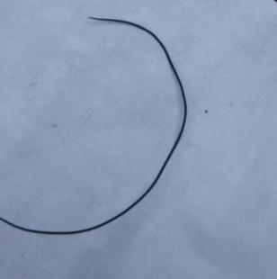 铁线虫有什么危害?怎么杀死它?