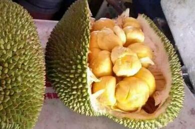 2017年种植什么?海南新兴水果榴莲蜜亩产值上万元