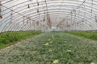 冬天如何管理大棚蔬菜?大雪压垮蔬菜大棚怎么办?