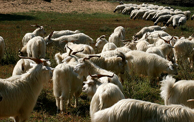 2017年我国羊绒产业结构及市场分析