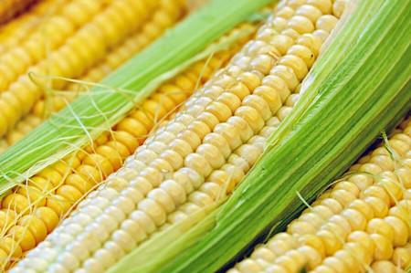 玉米怎样种植才有出路?