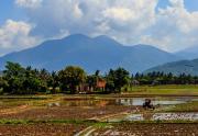 什么类型的农村合作社将无法发展下去呢?