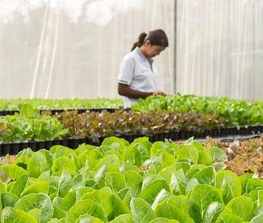 发改委:农村一二三产业融合发展推进情况