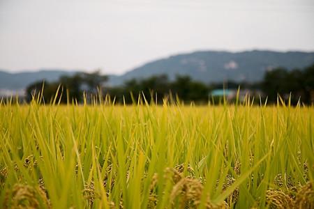 看各种不同的土地流转方式如何引领农民增收致富