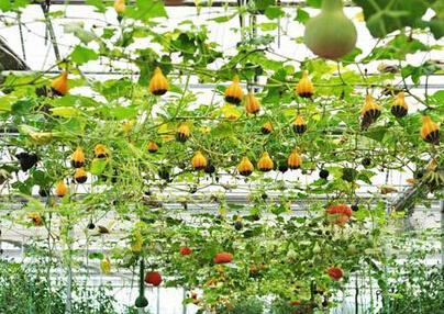 海南省农业新技术:发展生态循环农业