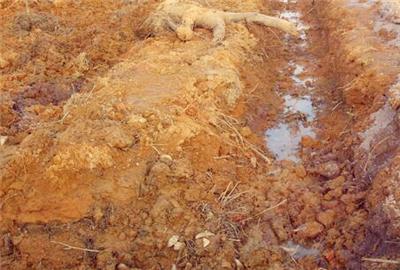 福建省旱地改造为水田项目建设标准和立项指南(最新消息)
