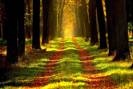 """《广西林业发展""""十三五""""规划》印发 重点建设这些森林旅游区"""