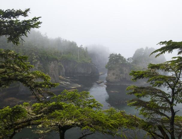 2017年广东省级生态公益林补偿达到28元每亩