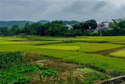 云南省:富源农田水利改革速度效益并进