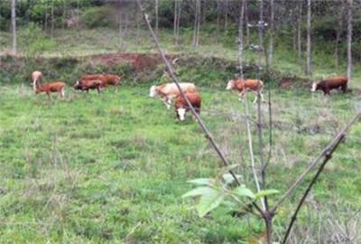 山西省农业厅关于认定家庭农场的暂行意见