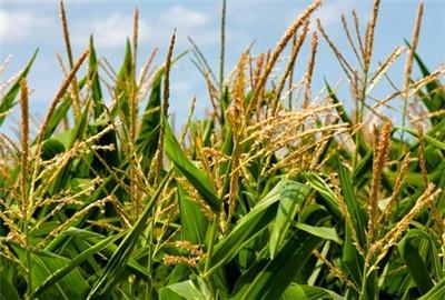 山东着力构建现代农业三大体系