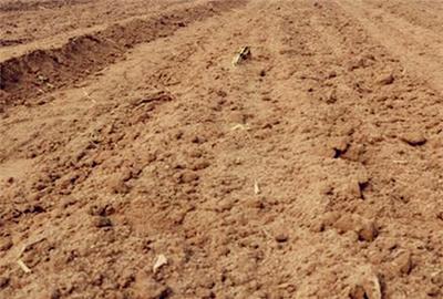 南阳市土地流转最新消息:全市耕地流转面积278万亩