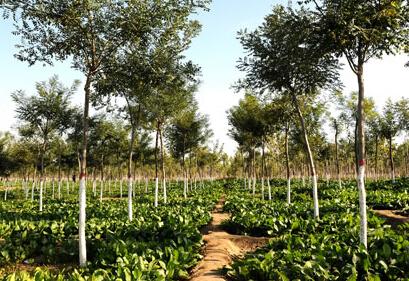 2017年湖南省家庭农场数目及每户最高补贴资金
