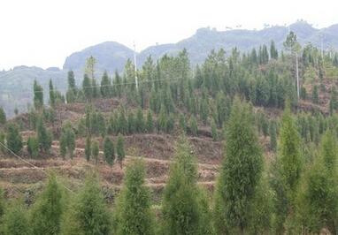 滁州市农村土地流转总量面积及相关政策措施