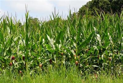 甘肃省省长等人对全省农业农村工作作出批示
