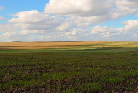 内蒙古阿荣旗新发乡土地流转每垧地每年可收多少钱租金?
