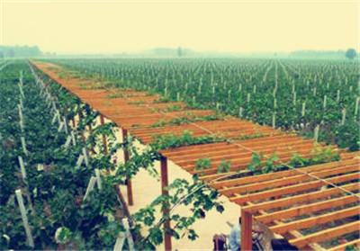 关于印发《湖南省省级示范家庭农场创建办法(试行)》《湖南省家庭农场示范县创建办法(试行)》的通知