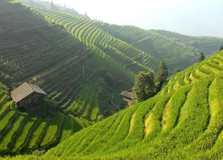 贵州省晴隆县坡改梯土地流转每亩租金多少元?