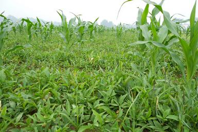 牡丹江市特色农产品带旺农业经济促发展
