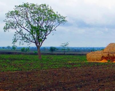 中药材种植要看土壤,如何选择适合种植的土壤?