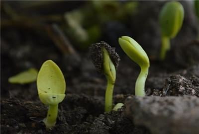 安徽省创新现代农业经营体系的生动实践