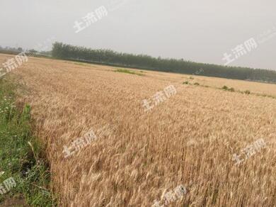 安徽定远县创新农村承包土地经营权抵押贷款