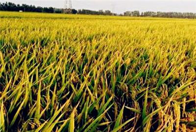 """《重庆市农业农村发展""""十三五""""规划》解读"""
