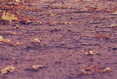 玉林市土壤污染防治行动工作方案